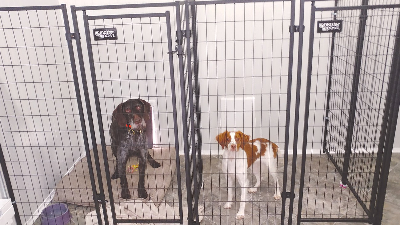 New Dog Boarding Kennel Open And Ready For Business Cook